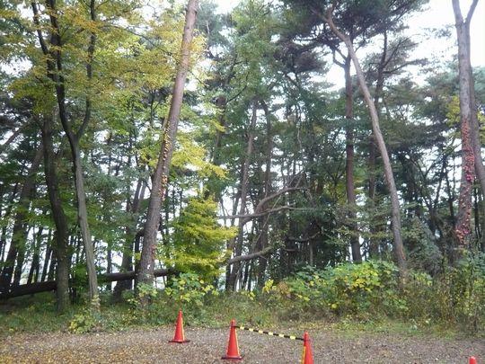 埼玉県立精神医療センター内 伐採工事